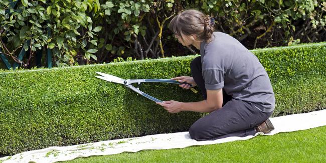Garantie décennale pour jardinier paysagiste : comparateur, devis et tarif